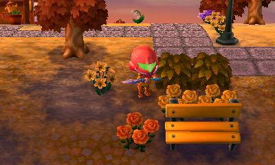 Orange Rose with yellow parents