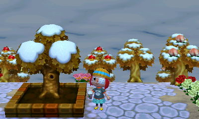 snowy inaugural tree