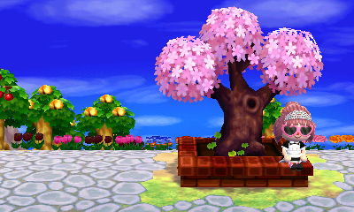 Kasen's town tree awash in pink.