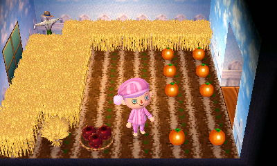 OMG pumpkin patch!